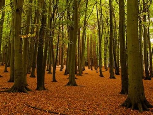 hopwas_woods