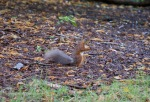 allanbank-squirrel2
