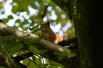 allanbank-squirrel3